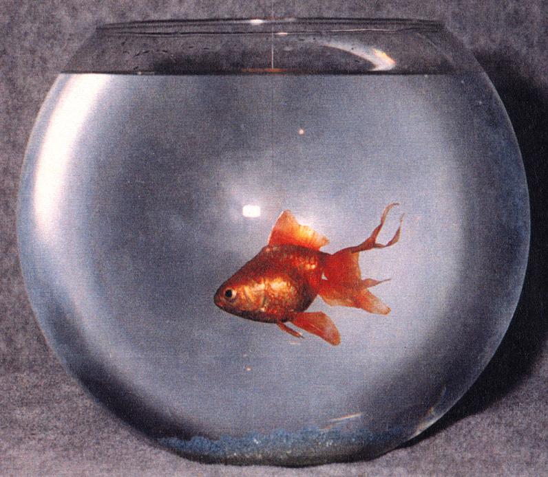 Animatedfx animatronic fish for Talking bass fish